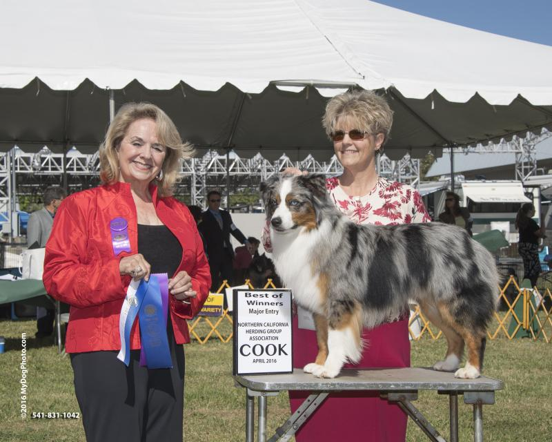 Stirling taking Winner's Dog and Best of Winners @ the Sac Show in April, 2016